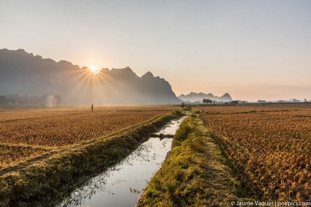 Sunrise in a rice field of Hpa-An, Myanmar (Burma)